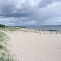 Grassy Beach Image
