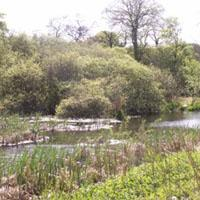 Trottick Mill Ponds Local Nature Reserve Image