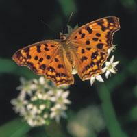 Meet McManus - Talk and Tour: Insects in Winter Image
