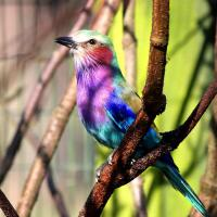 The Friends of Camperdown Wildlife Centre Spring Open Day Image
