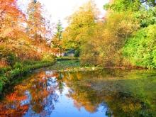 Camperdown Park Fire Pond