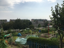 Category 4 - Allotment Site Award - City Road Allotments - First Place (4)