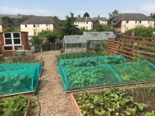 Category 4 - Allotment Site Award - Murrayfield Allotments - Second Place (3)
