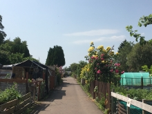 Category 4 - Allotment Site Award - Murrayfield Allotments - Second Place (4)