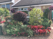 Category 5 (Residential Front Garden or Entrance) - First Place & Overall Garden Competition Winner (1)