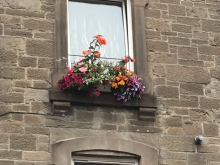 Category 8 (Display of Window Boxes andor Patio Planters) - First Place (2)