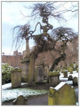 Old Trees in Dundee's Howff