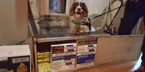 Dogs help sniff out illegal tobacco Image
