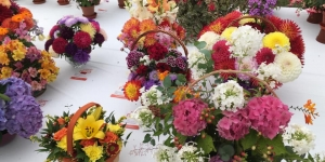 Dundee Flower and Food Festival 2020 cancelled Image