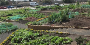 Local food growing strategy Image