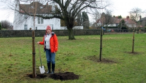 Japanese cherry trees planted at Dawson Park Image