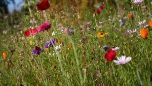 Dundee making biodiversity progress Image