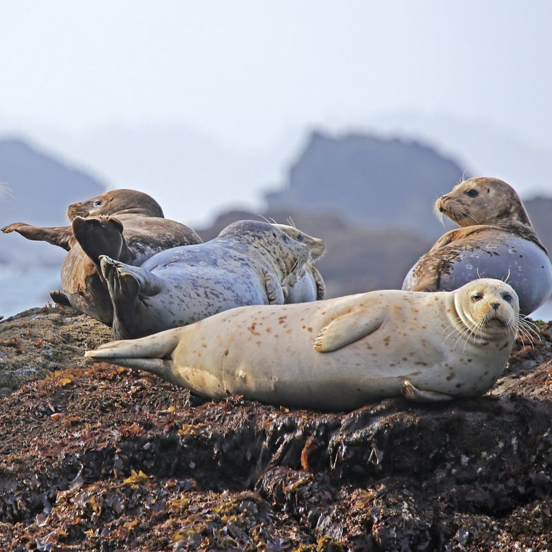 Seals as Sentinels of Ocean Health Image