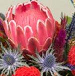 Native Plant Exhibition Image