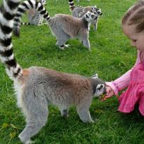 Love Your Zoo Week Image