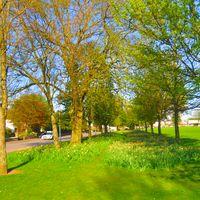 Fairmuir Park Image