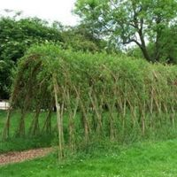 Make a Living Willow Tunnel Image