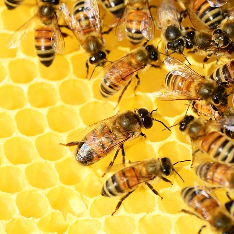 Bee Walk Image