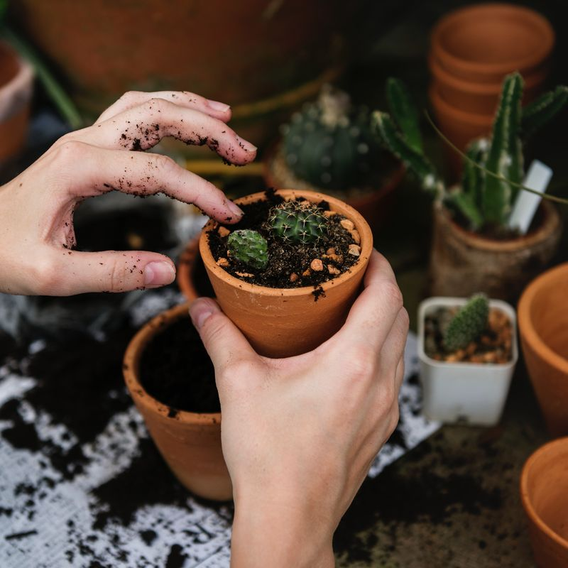Mini Diggers Gardening Club Image