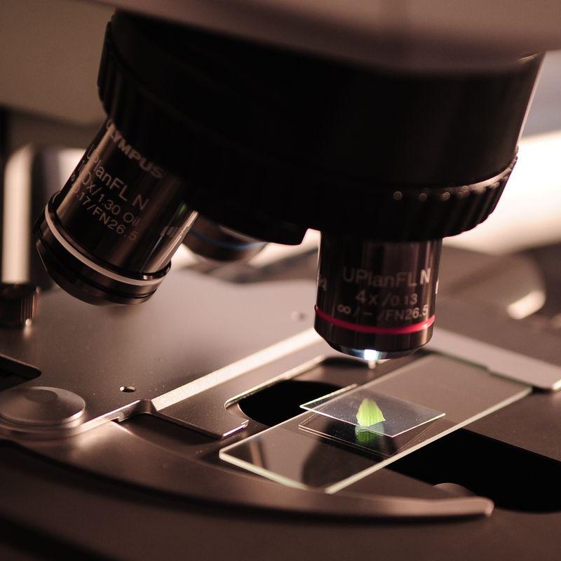 Dementia Under the Microscope Image